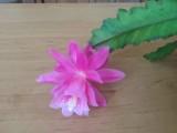 kvet5